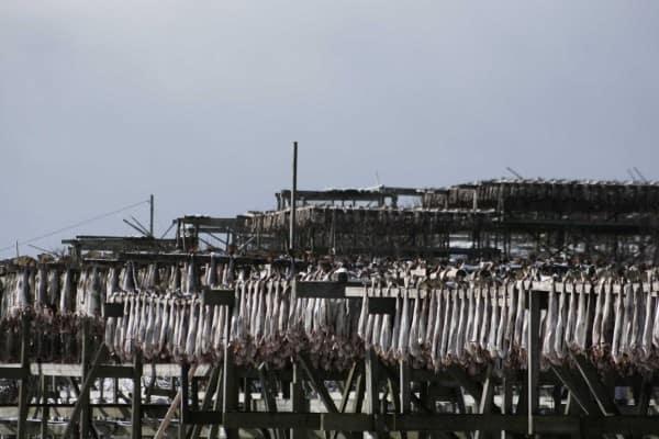 Det er forskjell på torsk. I følge Grønt Napp er Barentshavtorsk/Skrei ok, mens kysttorsk skal man holde seg unna. Foto: Henning Fjeldheim
