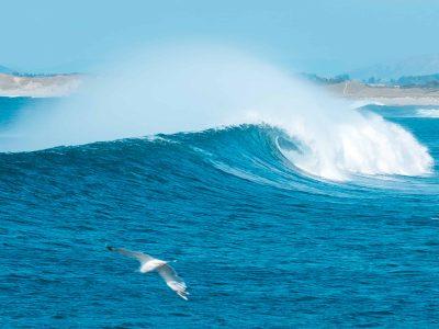 Jædaren – Surfesesongen er definitivt i gang