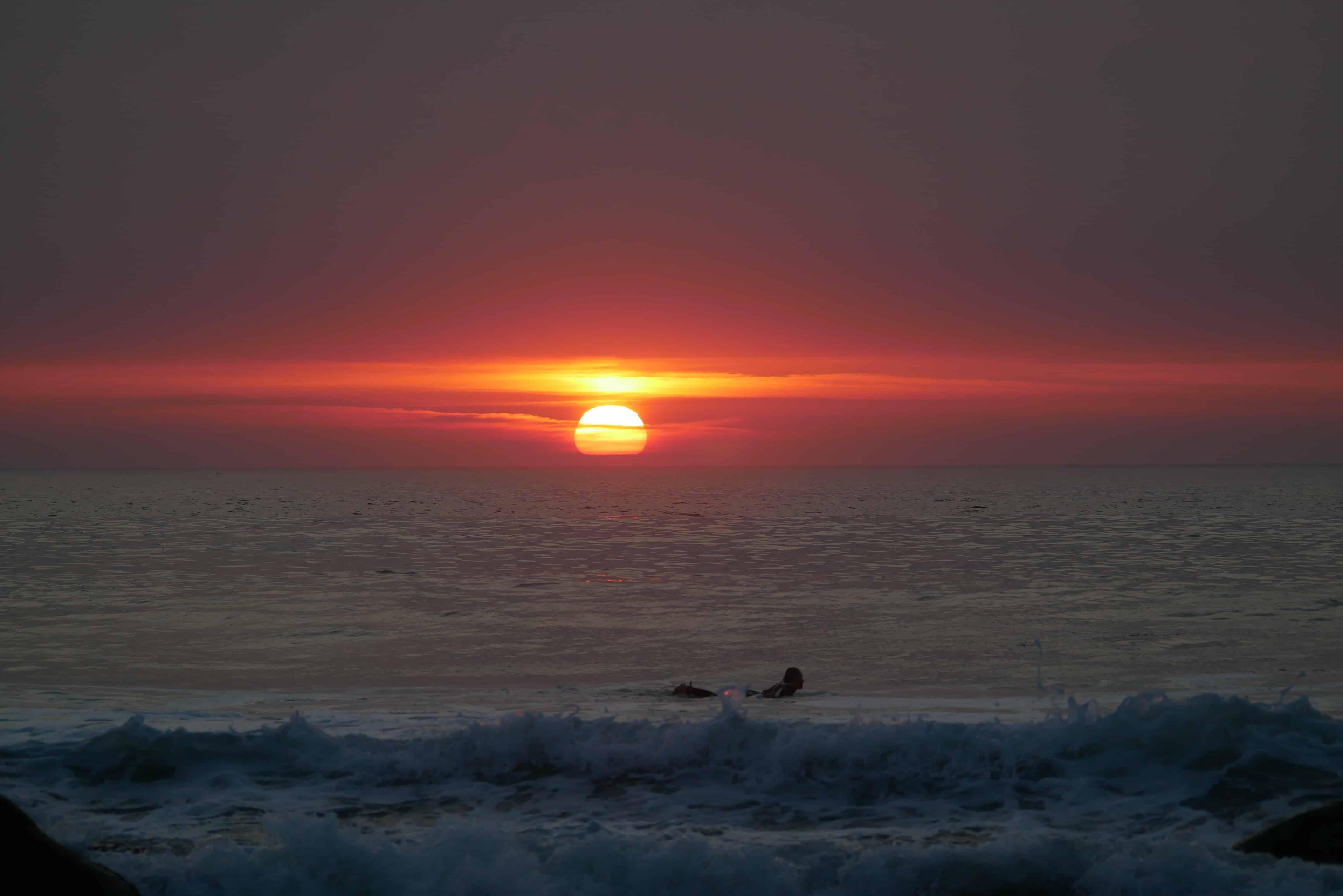 Lone wolf i solnedgang - Sigve Brochmann
