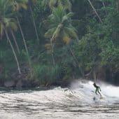 Typisk Sri Lanka, boardshort, palmetrær og tropisk